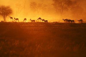 Afrika Fotoreisen in die Kalahari Wueste mit Stephan Tuengler