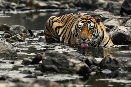 Gruppenreise Indien Tiger und Taj Mahal