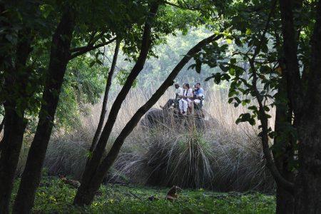 Tiger vom Elefantenrücken aus beobachten - Indien Reise