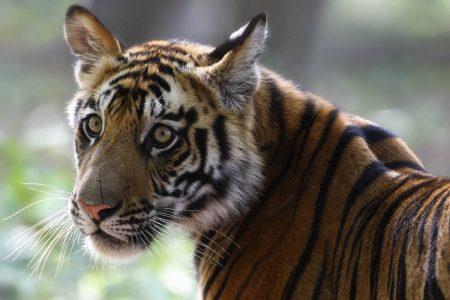 Fotoreisen nach Indien - Tiger und Taj Mahal