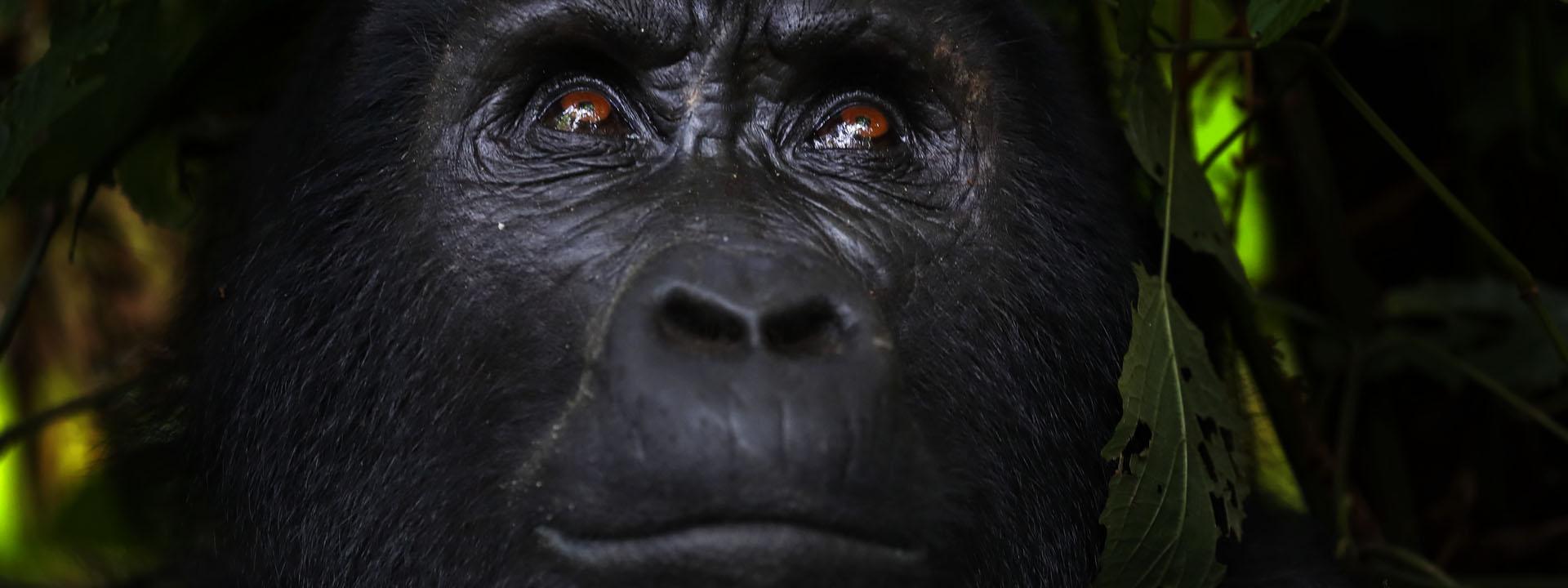 Afrika Reise Uganda Ruanda