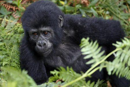 Reise Uganda