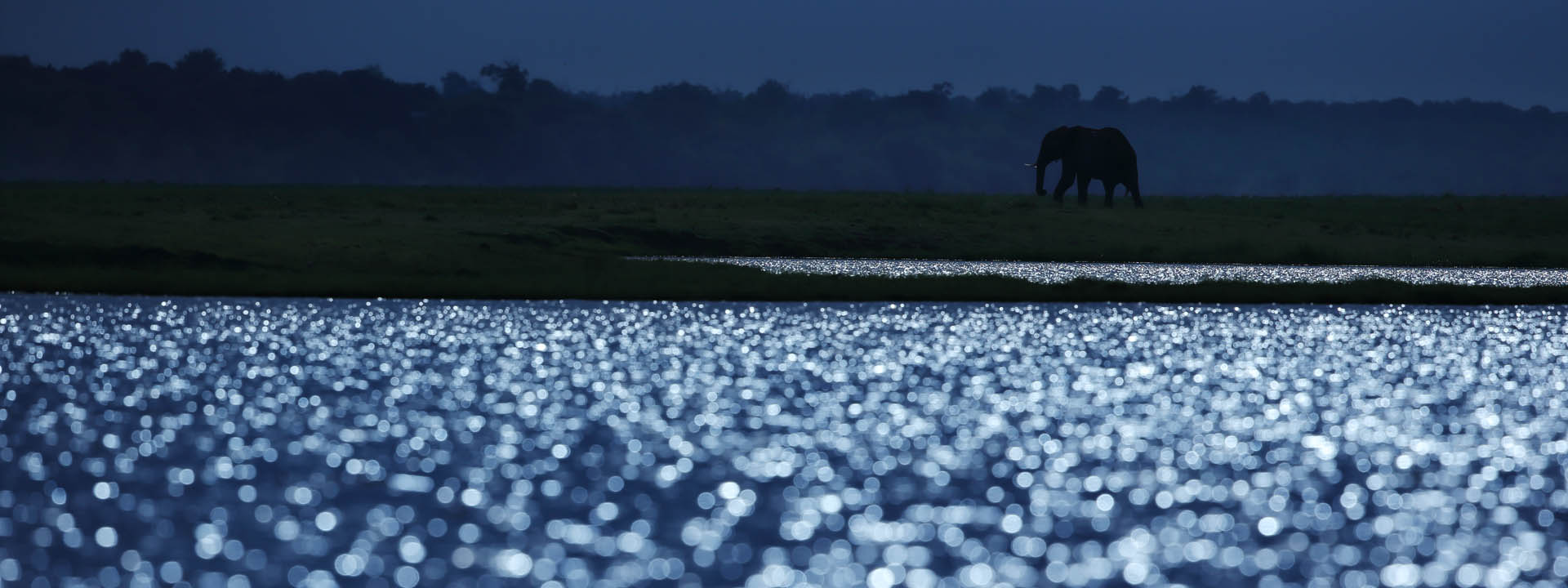 Elefant abends am Chobe