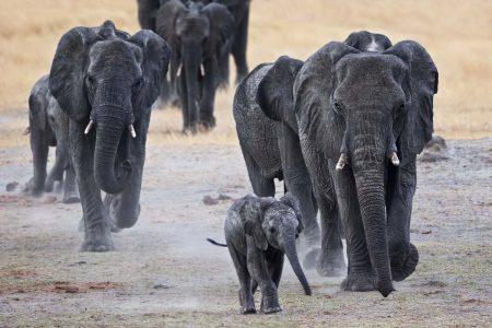 Reise Simbabwe Afrika