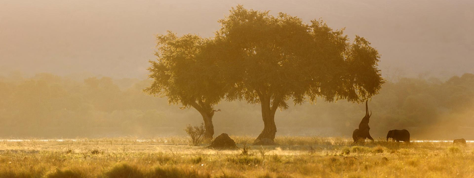 Sonnenuntergang Mana Pools, Simbabwe