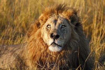Afrika Fotoreisen: Mr. Nose - fotografiert auf einer In AFRICA Botswana Reise