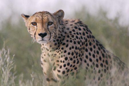 Kalahari Fotoreise