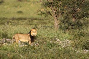 In der Kalahari wird es im südafrikanischen Sommer sehr heiß und es kann immer mal wieder stark regnen.