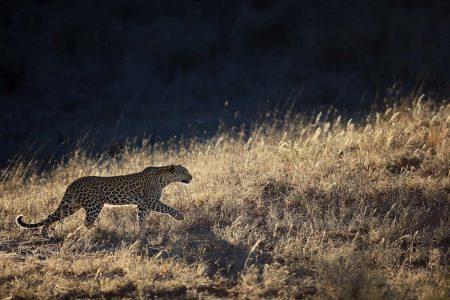 Reisen Kalahari Afrika