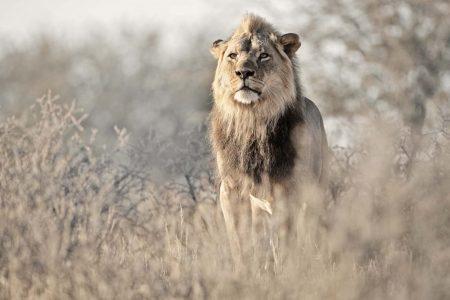 Fotoreise Kalahari