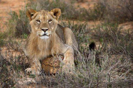 Reise Südafrika Kalahari