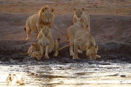 Morgens bei Somalisa. Fotoreise Simbabwe Somalisa und Kanga Pan