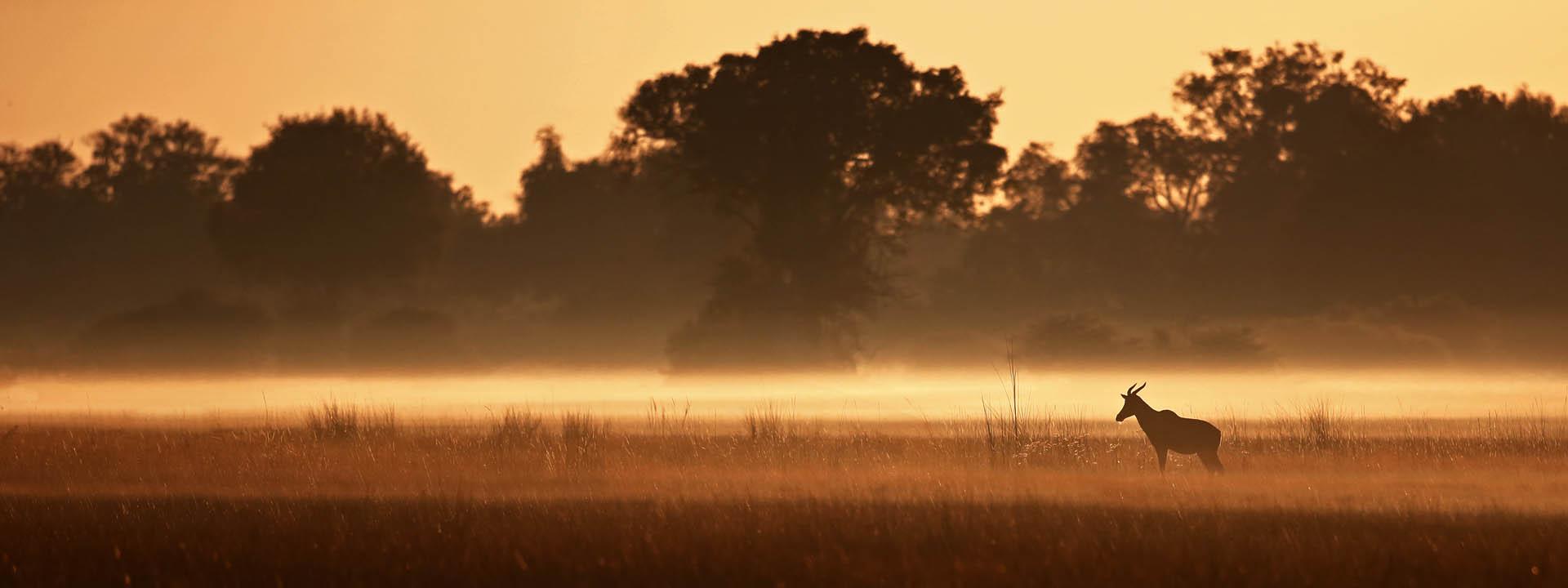 Morgens im Okavangodelta – Tsessebe