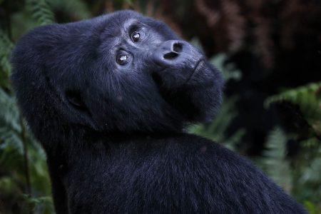 Afrika Reise Uganda