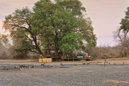 Wildhunde in der offenen Kanga Pan direkt am Camp. Im Hintergrund erkennt man das Hide.