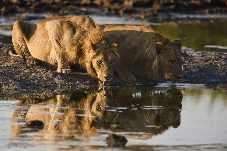 Fotosafari Moremi und Chobe - Botswana
