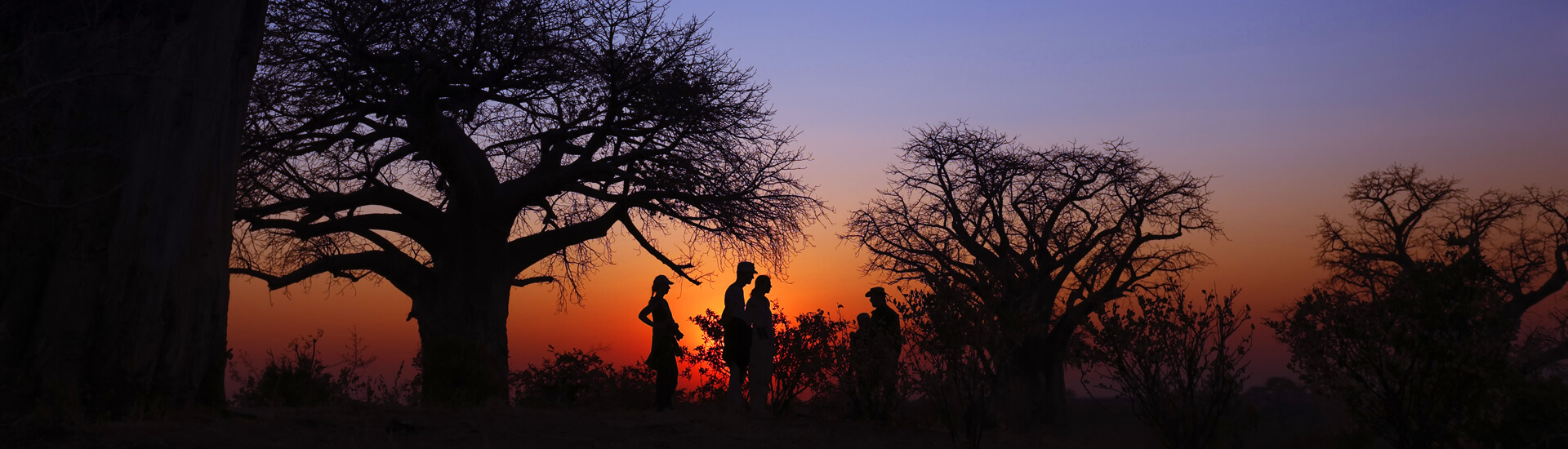 Sonnenuntergang in Mana Pools mit Baobabs.