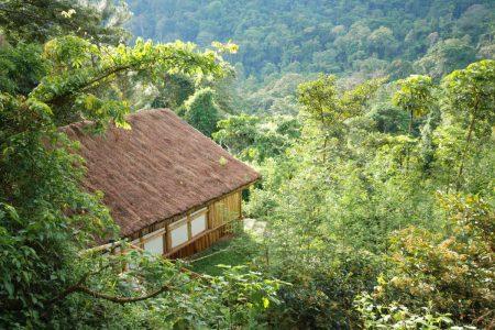 Fotoreise Primaten Uganda