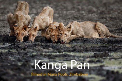 Afrika Reisen Zimbabwe