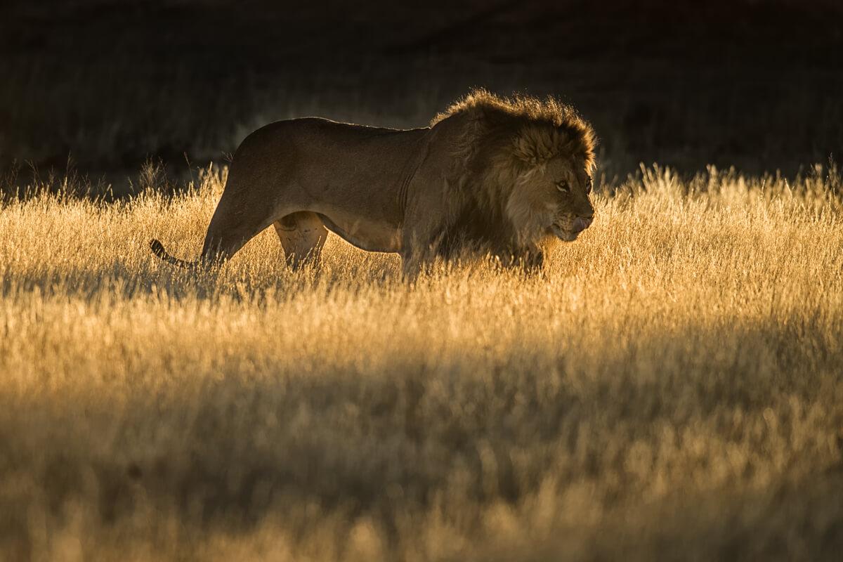 Afrika Reise in die Kalahari Wueste nach Suedafrika und Botswana - Kgalagadi Transfrontierpark.