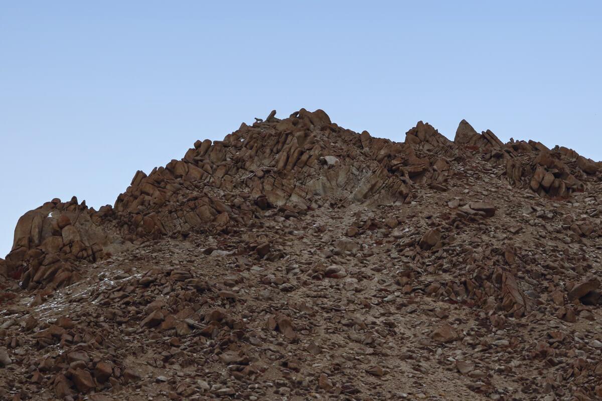Schneeleoparden fotografieren in Ladakh Indien