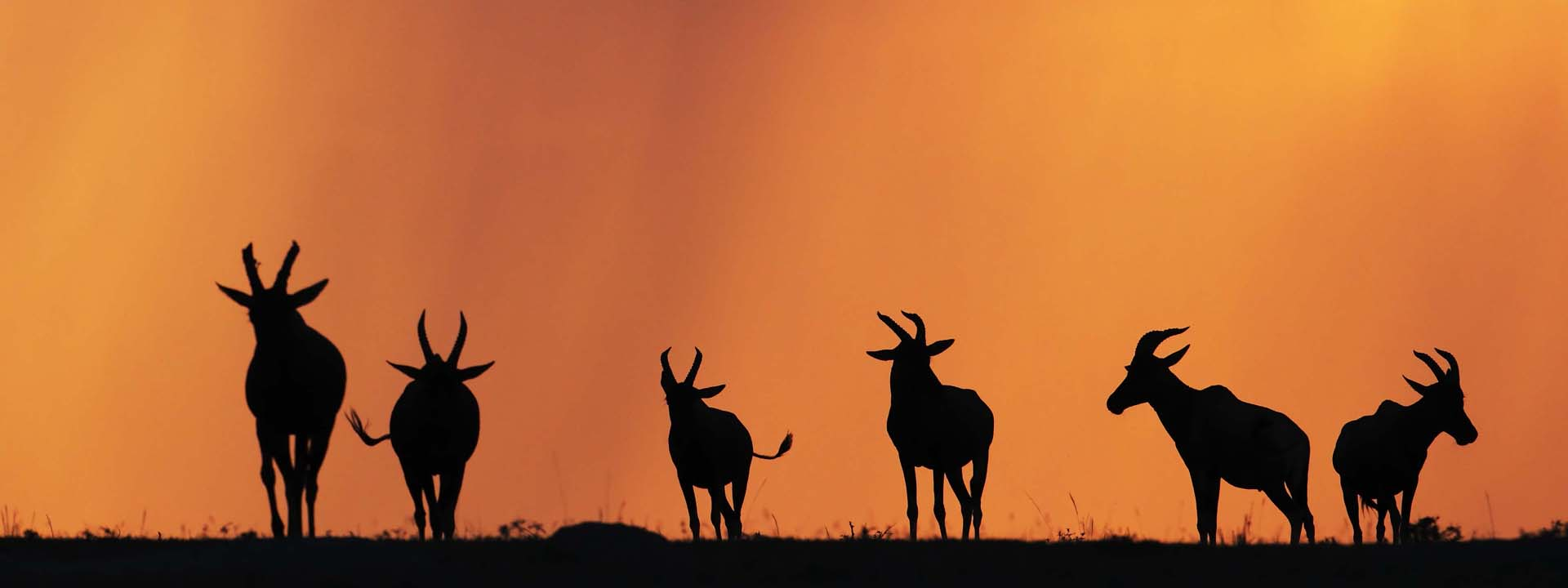 Topi Silhouetten Masai Mara