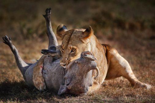 Masai Mara Fotoreise mit Stephan Tuengler, Kenia.