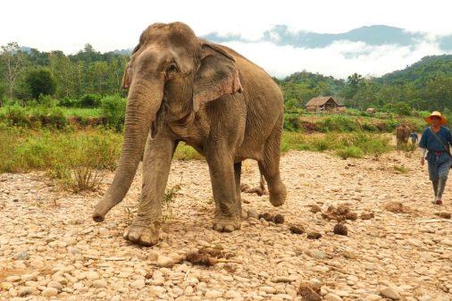 Laos Indien Fotoreisen