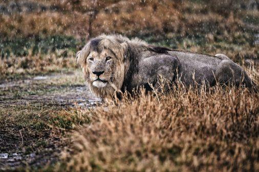 Fotosafari Botswana Fotoreise