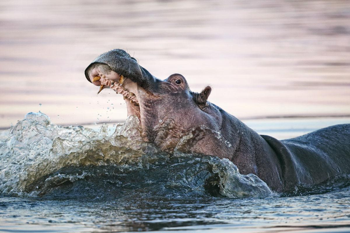Reise Safari Botswana