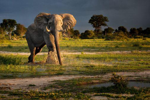 Elefant Botswana Okavangodelta