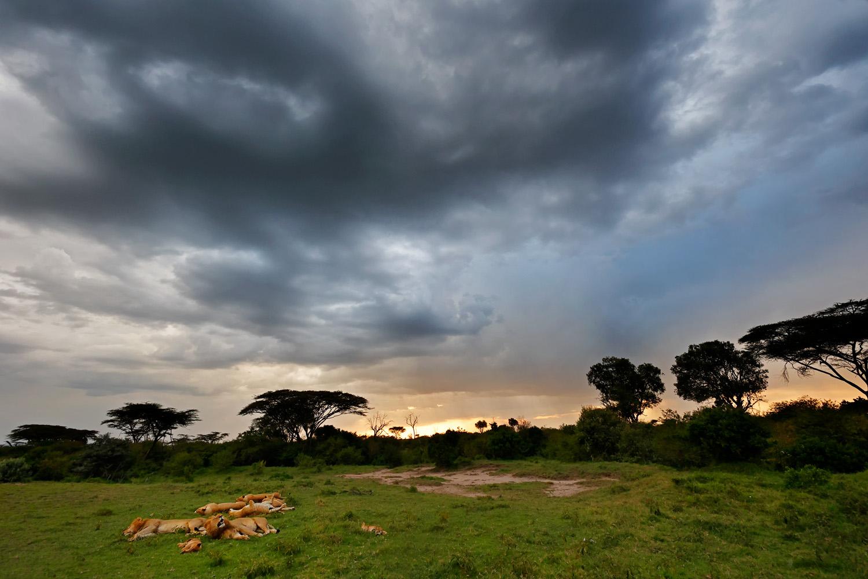 Kenia Fotosafari Löwen