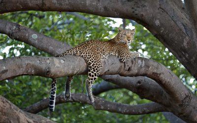 Fotosafari Afrika Sambia