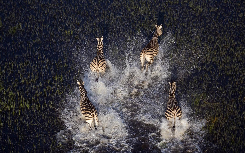 Fotosafari Afrika Botswana