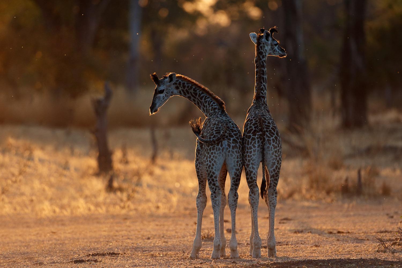 Afrika Reise Sambia