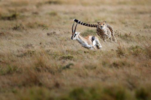 Fotosafari Masai Mara Kenia