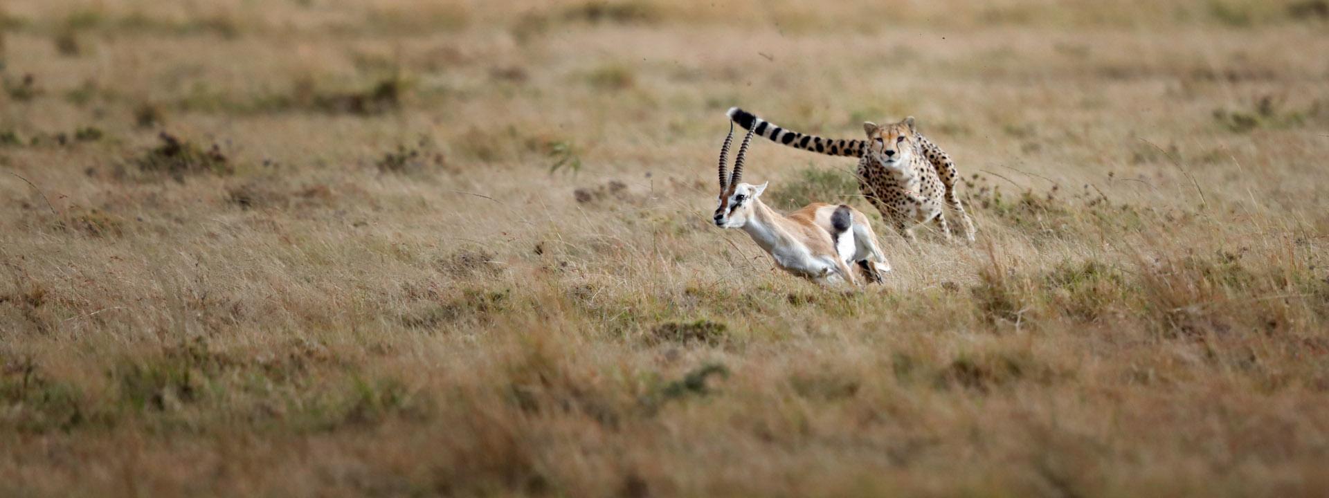 Masai Mara vom 20.11. bis 01.12.2021